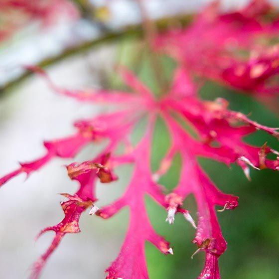 Visuel fleur rose, elleOZ